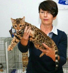 Кошечка леопард