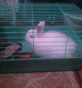 Продам декоративной кролика,вместе с клеткой.