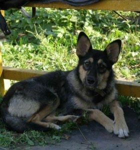 Собака-подросток Буся-10 мес-стерилизована-даром