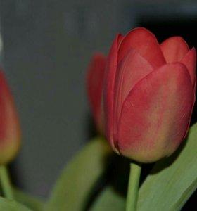 Тюльпаны menton
