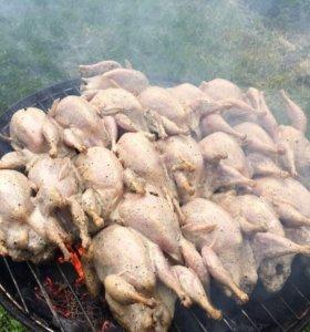 Мясо перепелов