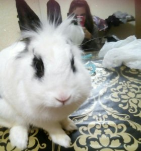 Кролик Симба
