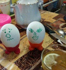 Инкубационное яйцо и цыплята бройлера