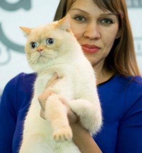 Вязка супер котик