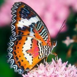 Яркие Живые Бабочки из Таиланда Флоренция