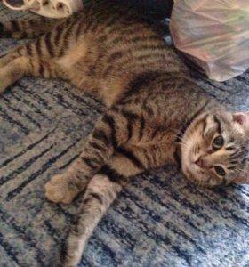 Котёнок Мурзик,6 месяцев