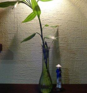 Бамбук в стеклянной вазе
