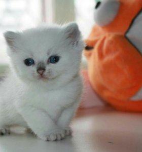 Голубоглазые кошечки и котики