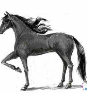 Продам лошадеи