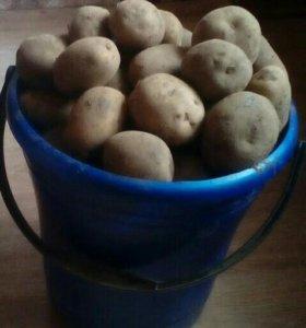 Продам крупный картофель на еду.
