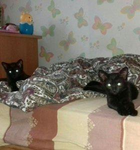 Котенок- кошечка