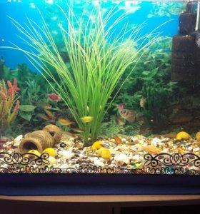 Аквариум с рыбками 100л