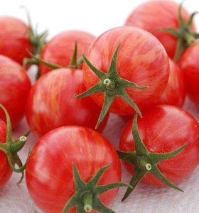 Семена томатов перцев овощей