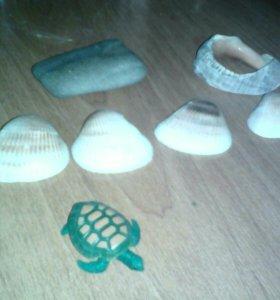 Камни ,ракушки черепашка,камень.