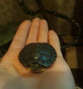 Мини аквариумная черепаха