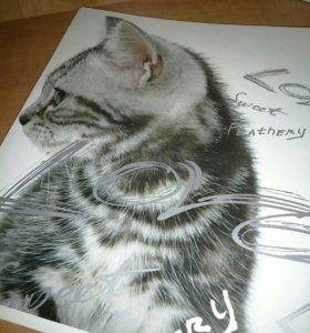 """Набор тетрадей в клетку """"Кошки"""", 48 листов 2шт 📖"""
