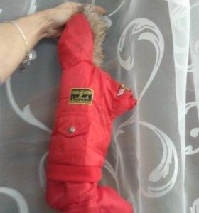 Одежда для собак зимняя