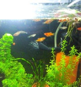 Разное для аквариума