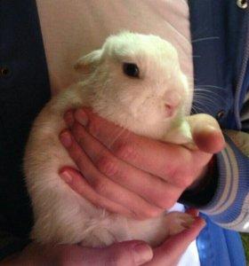 Кролик 🐰