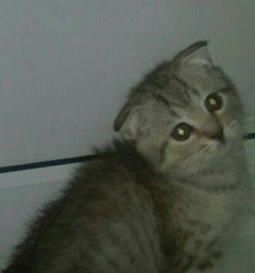 Коты в орехово зуево