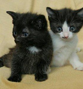 Плюшевые котята в добрые руки!