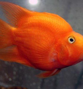 Продам разных крупных рыб
