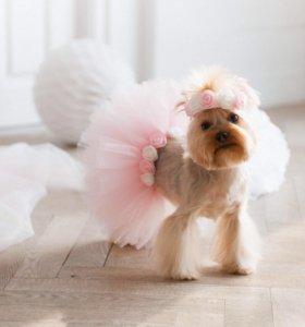 Прокат юбки-пачки для собаки на фотосессию