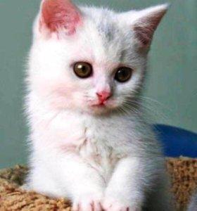 Белый котенок Симферополь
