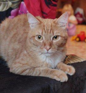 Дивный рыжий кот с полосатым хвостом