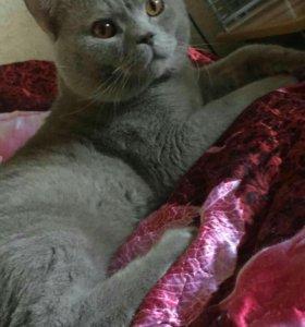 Вязка кот 3.5 года
