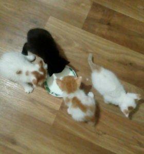 Котята бесплатно, 3 девочки, 1 кот черный