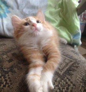 Замечательные котятки в дар