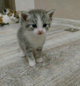 Серенький котик в беленьких перчатках.
