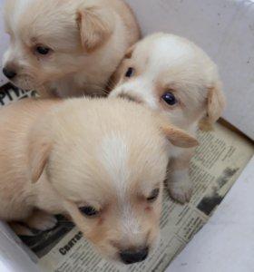 Милые щенята
