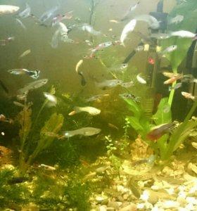 Рыбки итд