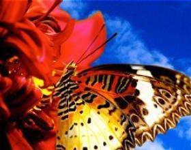 Экзотические Живые Бабочки из Непал Белянка