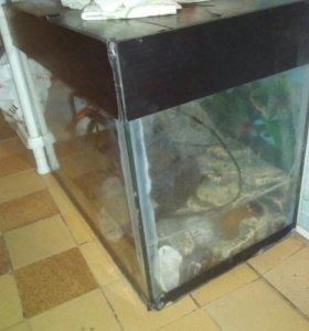 Черепашник для красноухих черепах.