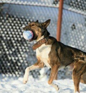Собака метис басенджи около 2лет-даром