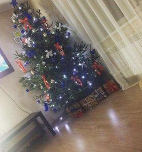 Новогодние живые елки