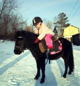 Катание детей в поводу на лошади или пони