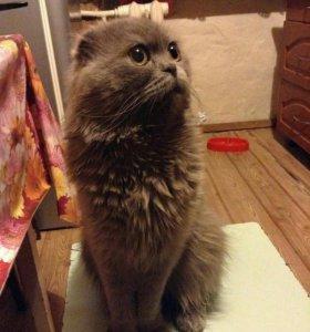 Кудрявые Котики ищут дом