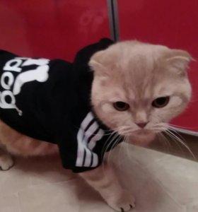Одежда для кота
