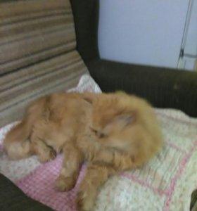 Рыжий котик, бесплатно