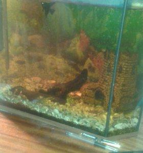 Рыбки с авкариумом