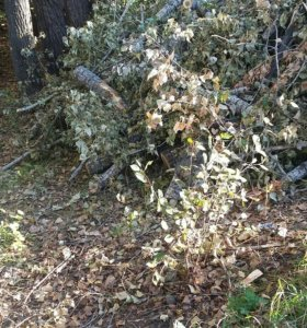 Спил деревьев утилизация демонтаж