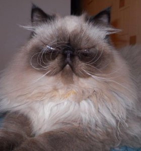Кот для вязки.