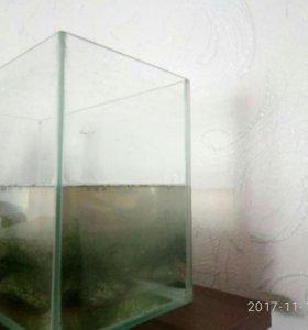 Аквариум 1000р