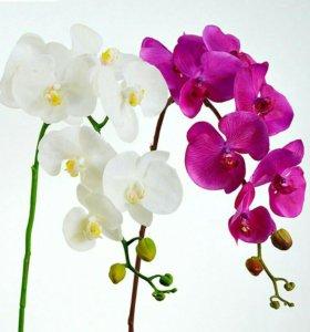 Орхидеи латексные