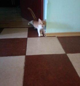 Передержка котов в домашних условиях