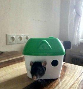 домик для грызуна